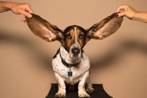 Use your ears for listening well