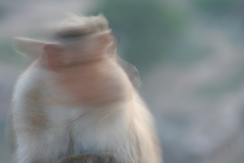 Monkey Boy ! Double take...
