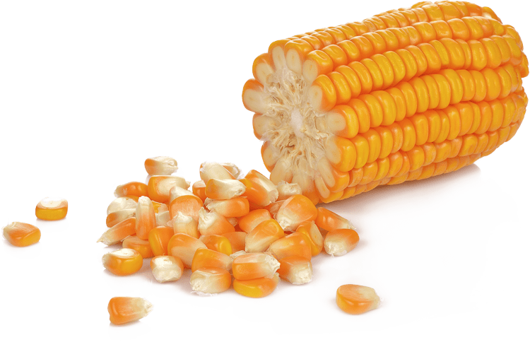 Corn on and off the cob