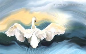 Swan and Star - Redbubble