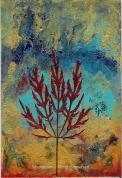 Japanese Maple - SOLD