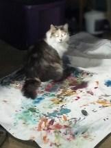 Mary Jane studio cat