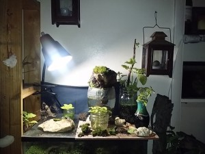 This is the little area I'm re-working. This is where I grow moss landscapes. It's a long term project, a time investment. It's my play station.