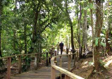 amazon jungle walking to amazon