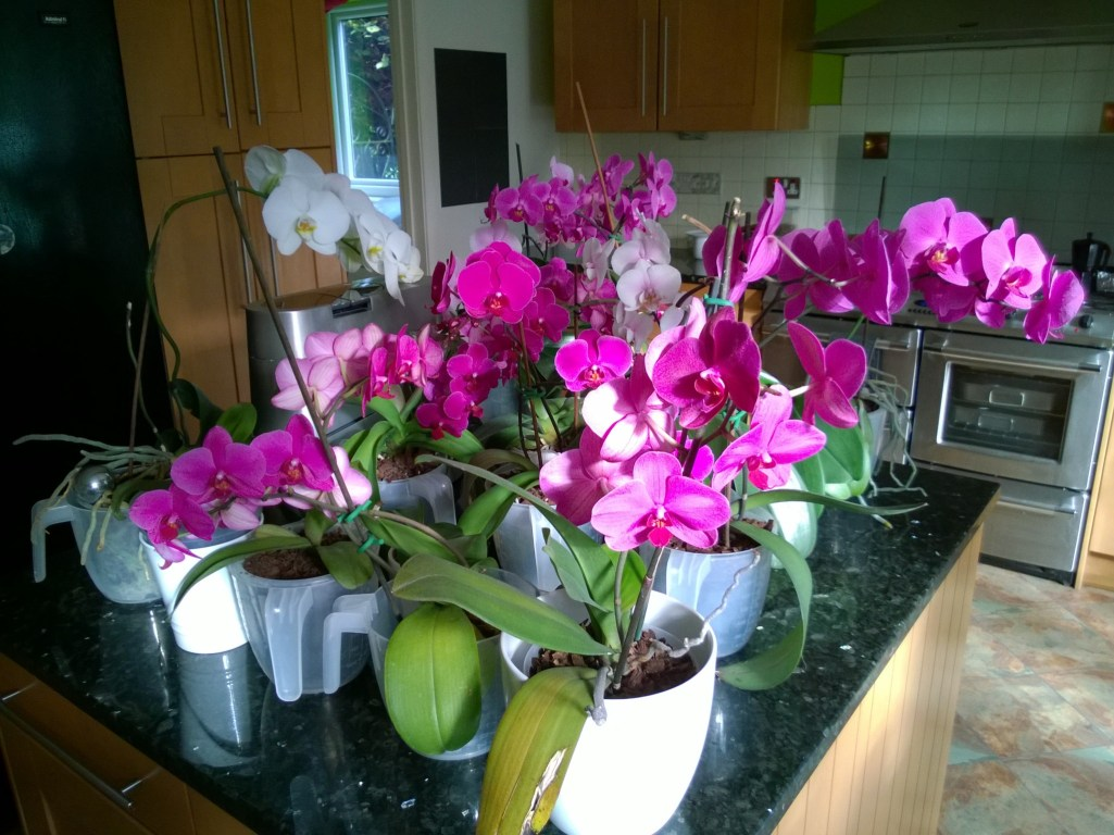 Watering the Orchids