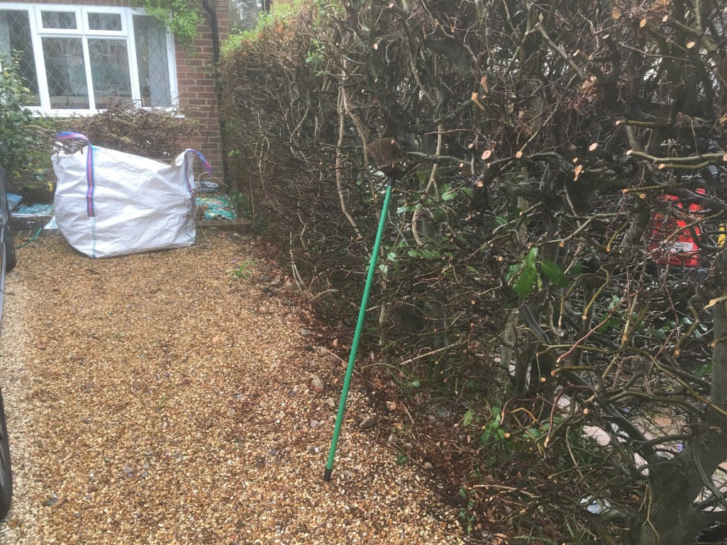 Pruned front beech hedge