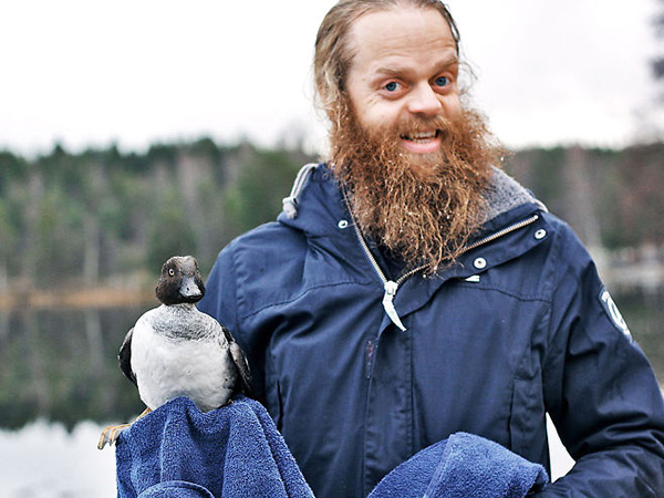 Norwegian man saves duck in ice