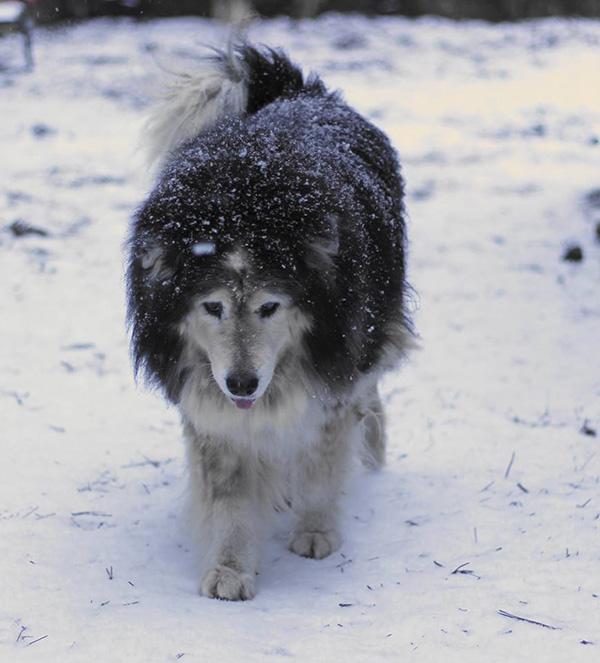 senior dog rescue