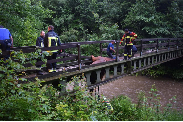 horse rescue bridge helicopter