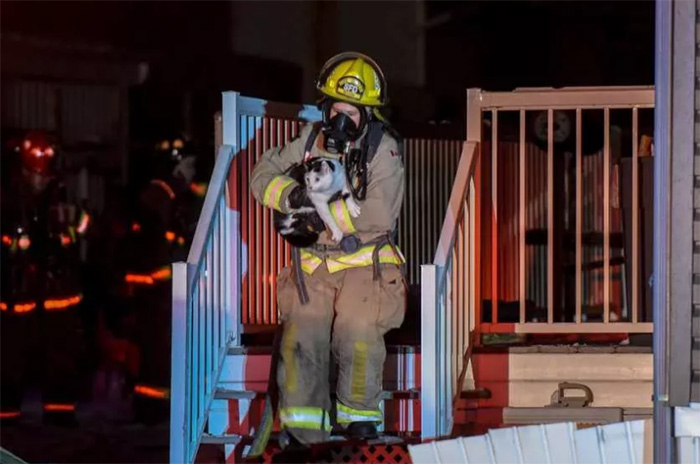 cat saves family from fire