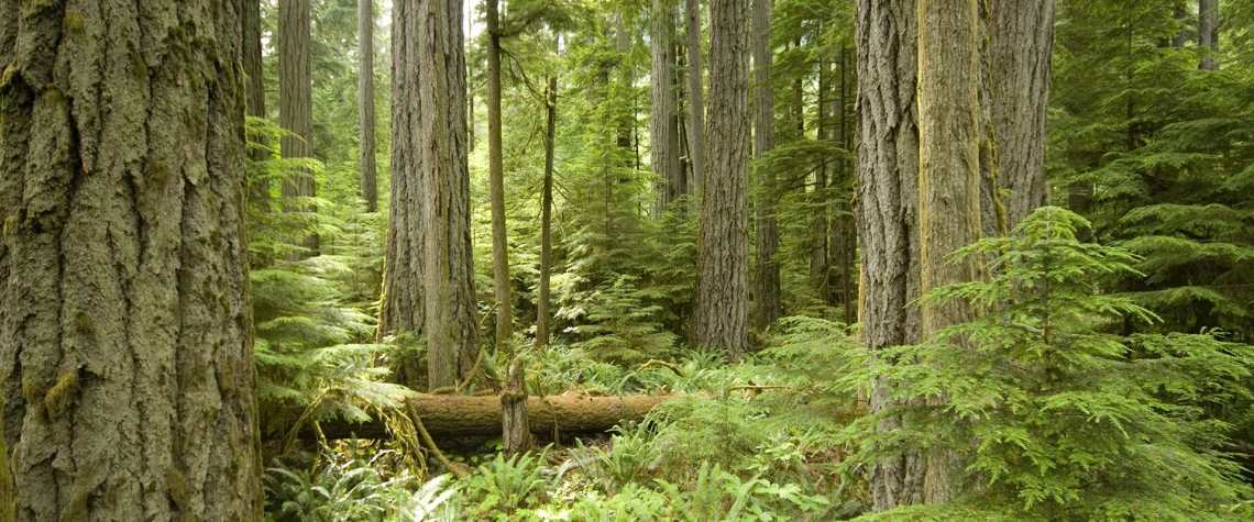 forest-bathing-tour-img
