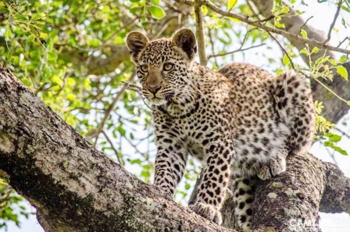Umkumbe Safari Lodge, Sabi Sand – A week in pictures