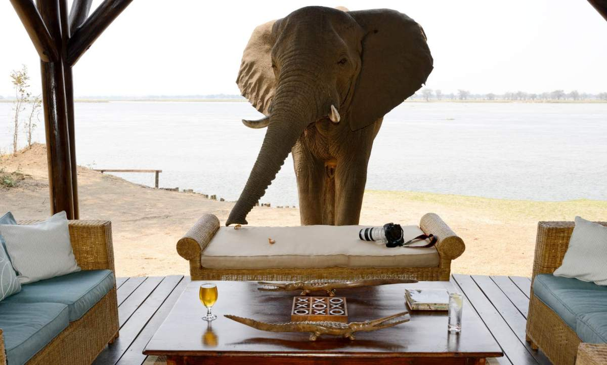 An elephant comes to visit at Chiawa Camp