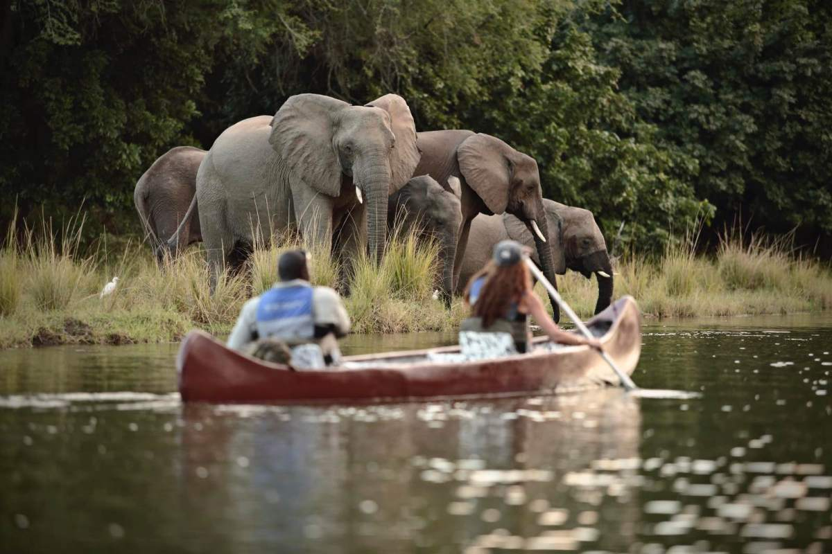 Watching elephants from a canoe on safari at Chongwe River Camp2