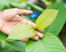 touching leaf