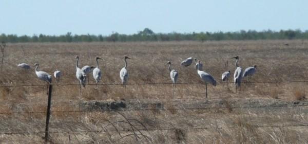 -Karumba-Mutton-Hole-Wetland