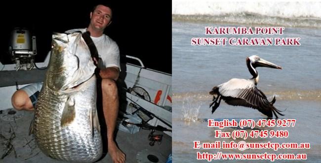 Barrmundi Fishing karumba point sunset caravan park accommodation cabins hotels fishing birds wild life queensland qld online direct booking book now
