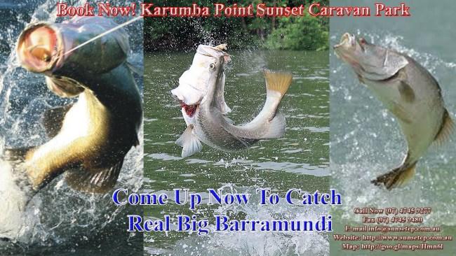 Flying Barramundi Fishing Karumba Point Sunset Caravan Park
