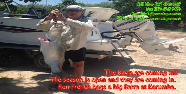 The Barra are coming in Karumba Point Sunset Caravan Park Cabins Hotels Accommodation