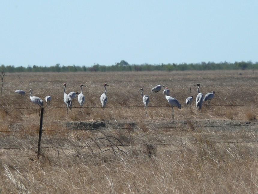 Mutton Hole Wetland