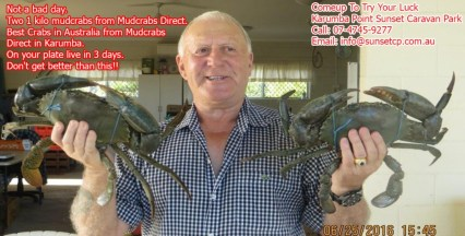 Not A Bad Day Two 1 Kilo Mudcrabs From Mudcrabs Direct