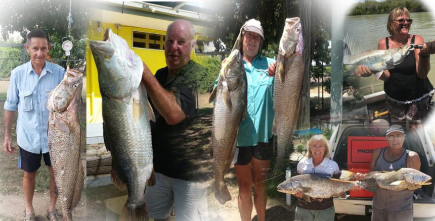 Fish Caught at Karumba Point Sunset Caravan Park in one week