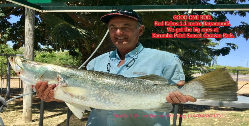 GOOD ONE ROD. Rod Kalms 1.1 metre Barramundie. We get the big ones at Karumba Point Sunset Caravan Park.