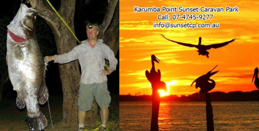 Huge Barramundi Caught Karumba Point Sunset Caravan Park