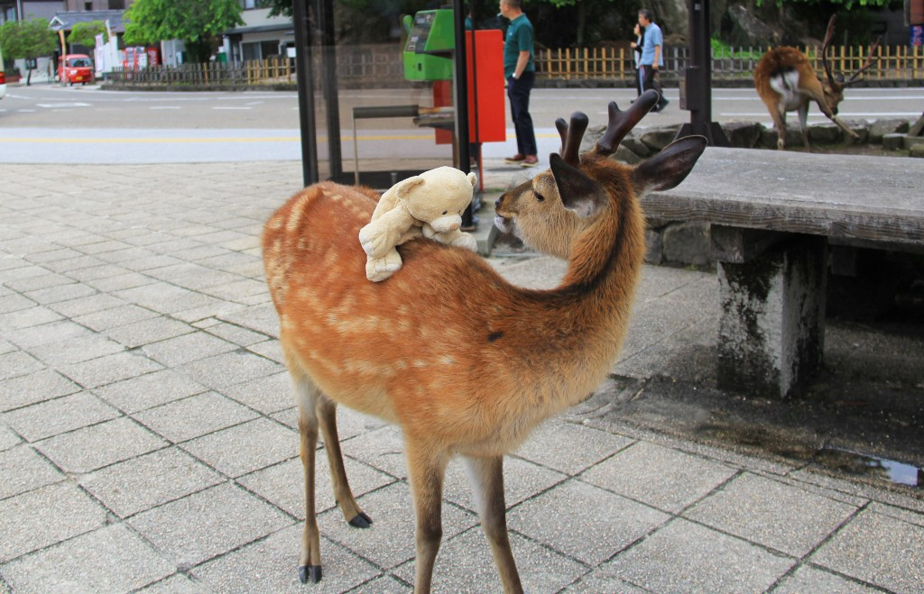 Woody making friends with local deer.