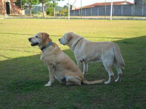 asilo-para-cachorros-caes-grandes