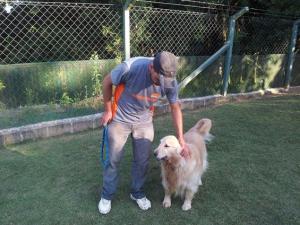 golden hoteis para cachorro sp