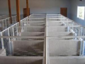 hotelzinho-para-caes-canil-pequenos (Copy)