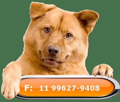 Telefone cachorro hotel