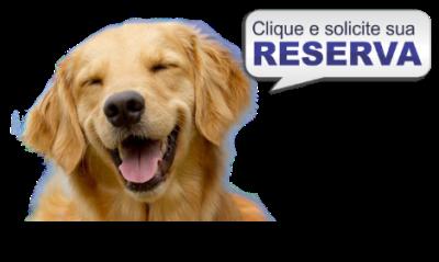reserva para doação de cachorros