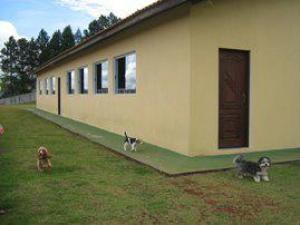 canil pequenos hoteis para cachorros sp