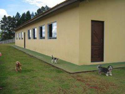 abrigo de caes para cachorros abandonados