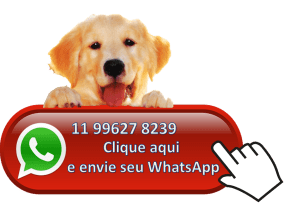 whatsApp adestramento de caes