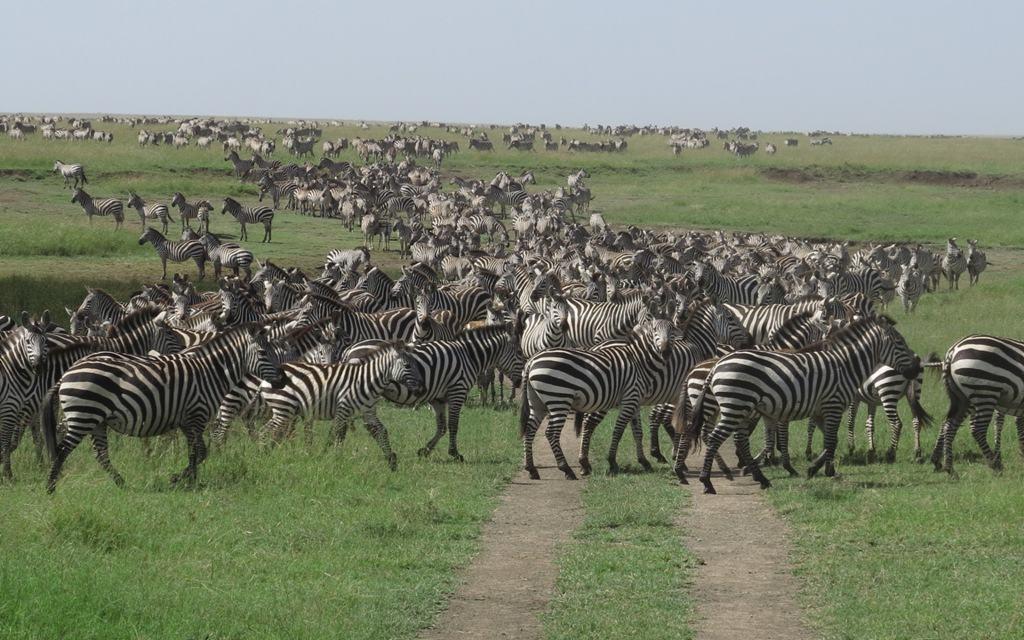 15 Days Safari to  Kenya-Uganda-Tanzania.