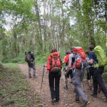 6 Day  Mt Kilimanjaro/ Climb, Machame Route