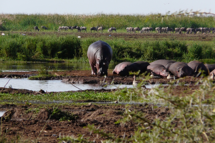 Tanzania Kenya Safari 12 Days