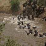 Lake Manyara, Serengeti, Ngorongoro 5 days