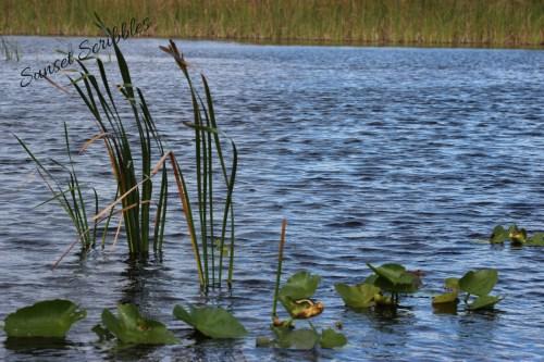 Airboat ride - Florida Everglades