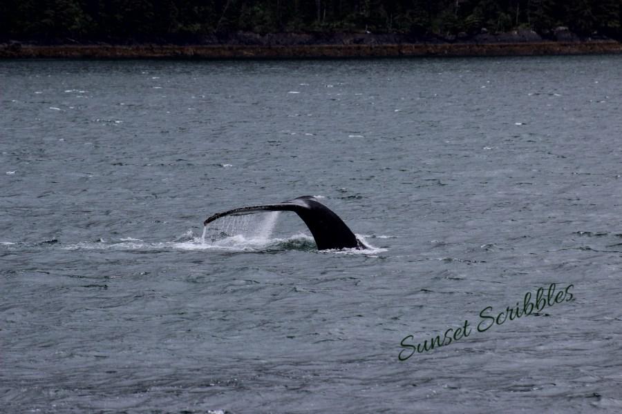 Glacier cruise - Seward, Alaska - Humpback whale
