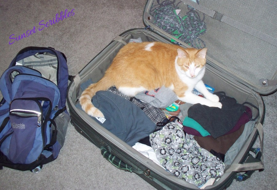 cat laying in suitcase