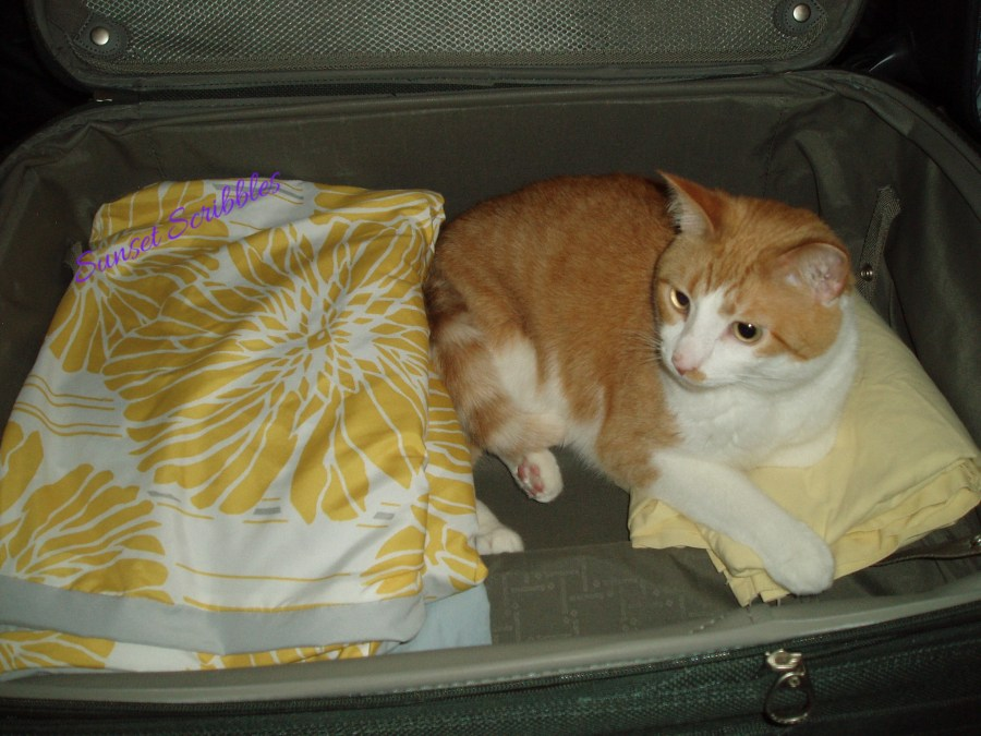 cat helping pack