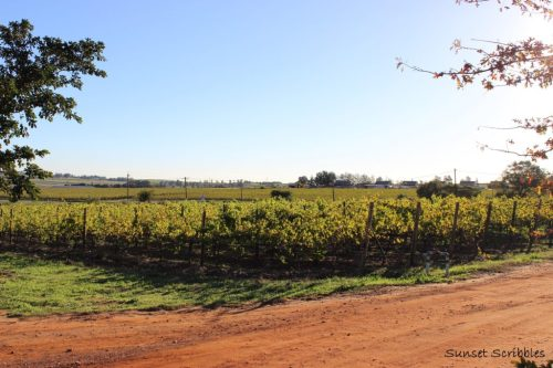 Wine tasting - South Africa