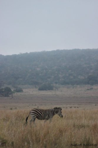 Safari Animals - South Africa