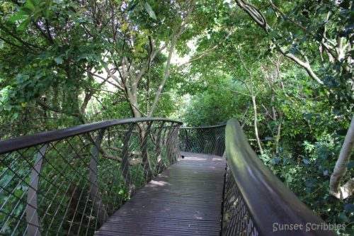 Canopy walkway South Africa