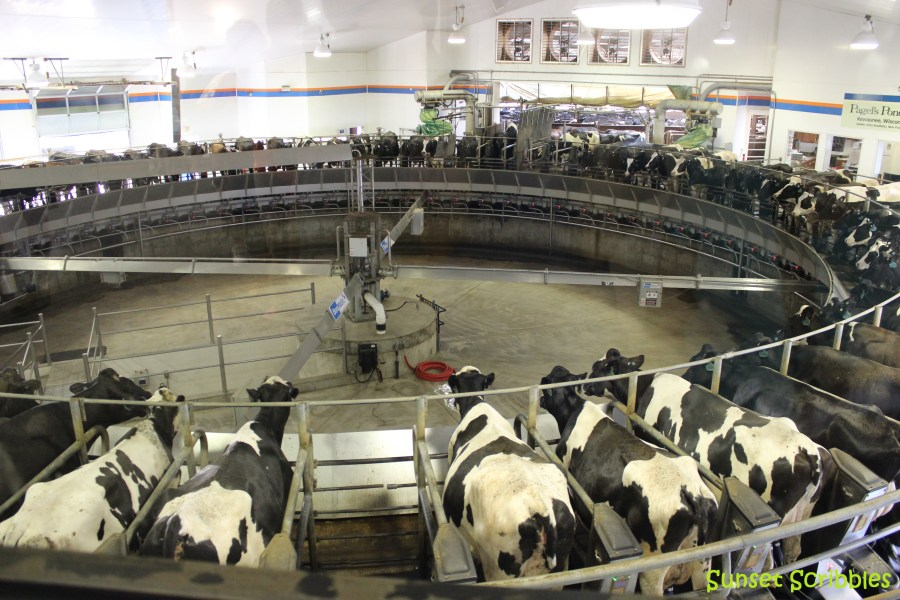 Rotary style milking parlor