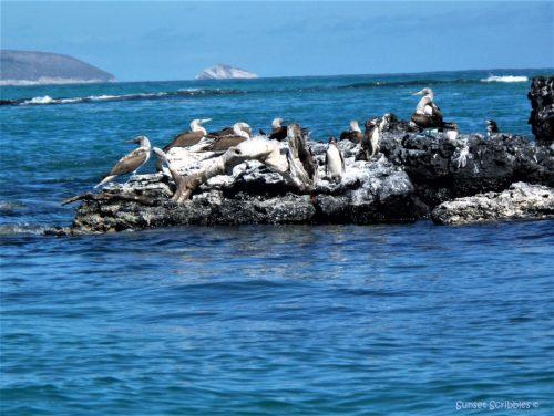 Isabela - Galapagos Islands